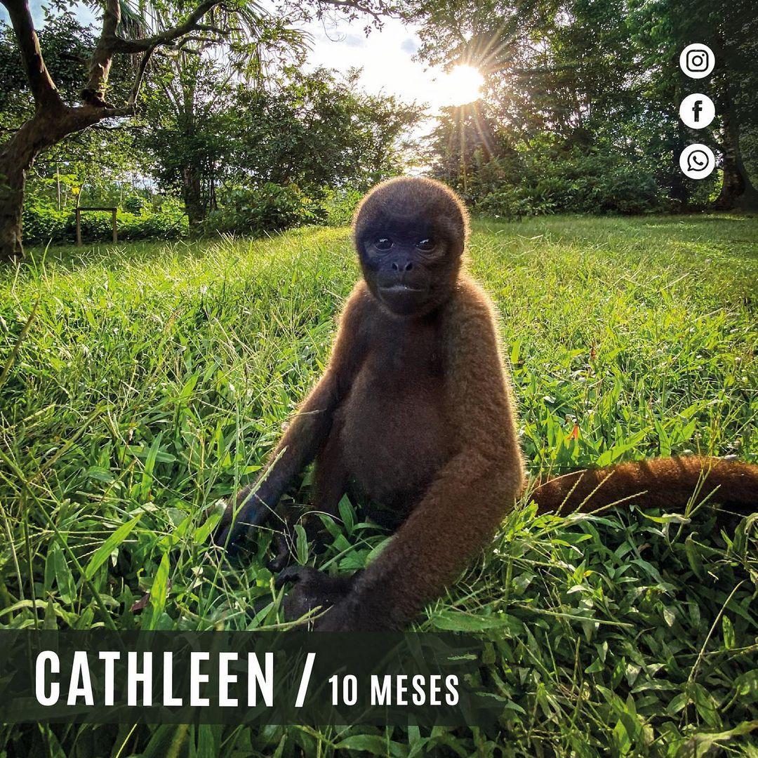 Cathleen Wooly Monkey Sitting on grass at La Isla de Los Monos Peru
