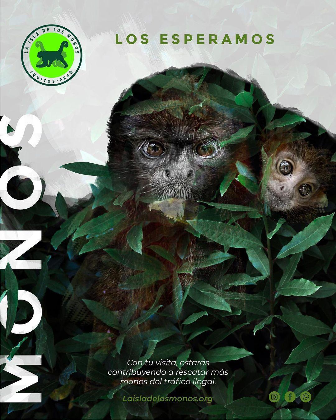 The Monkeys need your help